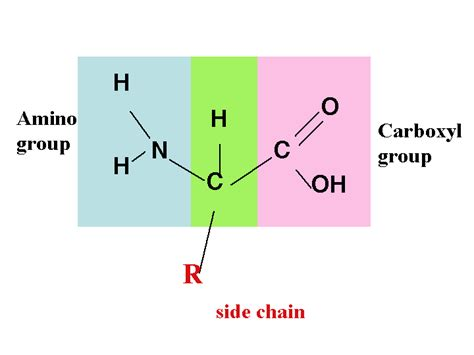 diagram of amino acid biochem80p stepping into the biochemistry realm page 2