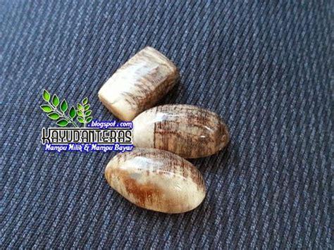 Fosil Mg Putih koleksi teras kayu dan batu gemunggal jadi batu fosil gemunggal terendam dalam air