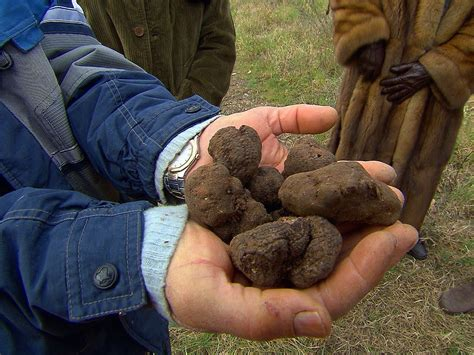 the most expensive in the world truffles the most expensive food in the world