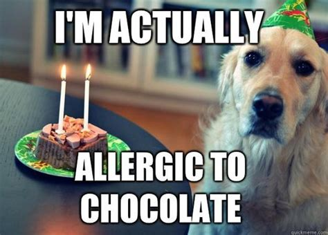 am i allergic to dogs 20 most birthday pictures
