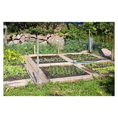 vegetable garden sprinklers gap photos garden plant picture library small