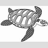 Hawaiian Sea Turtle Clipart | 830 x 615 png 155kB