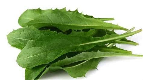 Bunny Nature Snack Fresh Green Snack With Dandelion 450g 5 drinks that use dandelion greens mnn nature network