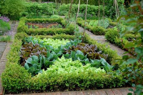 characteristic how to start a garden in your backyard