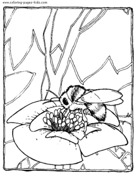 free coloring pages of honey bee life cycle