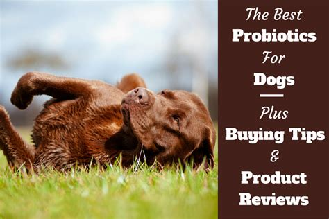 best probiotic for dogs best probiotics for dogs 5 top picks and reviews