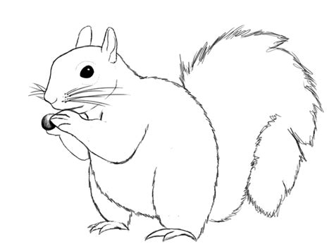 how to a squirrel how to draw squirrel