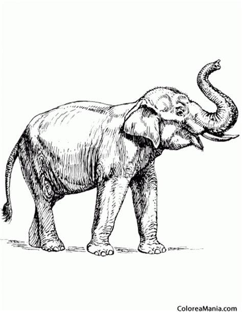 dibujos realistas para colorear colorear elefante dibujo realista animales de la sabana