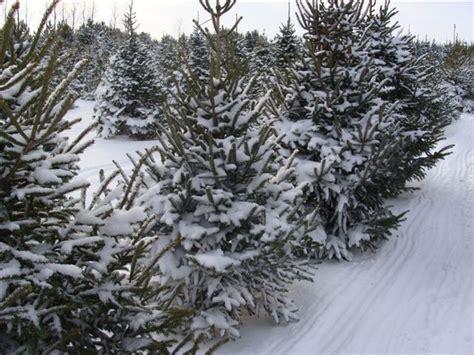 images of christmas tree farms minnesota best christmas