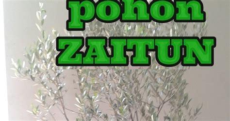 Harga Bibit Zaitun Tin rezeki buah jual bibit pohon buah zaitun buah tin ara