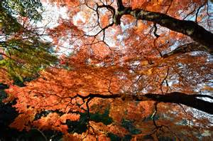 Fall Decorated Trees - autumn s coat of many colors a short guide to fall foliage guides travel