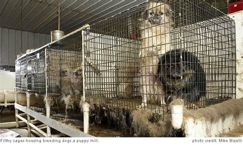 puppy mills are cruel no pet store puppies