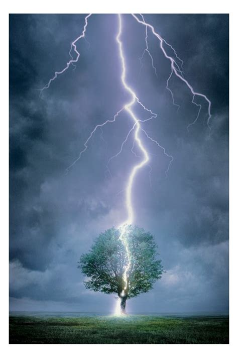 lighting tree interesting facts about lightning