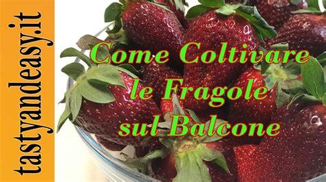 Coltivare Fragole Sul Balcone by Come Coltivare Le Fragole Sul Balcone Di Casa