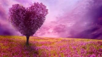le plus beau paysage fleuri voyez les meilleures images