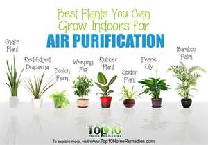 Best Air Freshener Plants 10 Best Plants You Can Grow Indoors For Air Purification