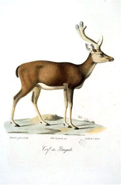 vintage printable animal 227 best art illustration design images on pinterest