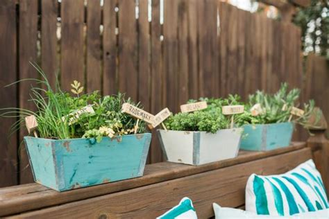 mini herb garden how to plant a mini herb garden hgtv