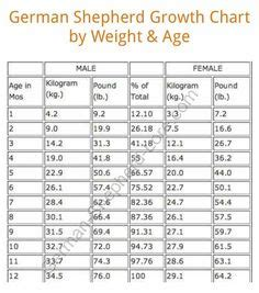 german shepherd weight chart and height nwk9com use a puppy growth chart to determine size growth charts