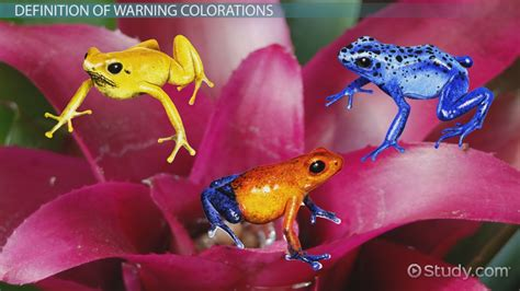 warning coloration warning coloration in animals exles overview