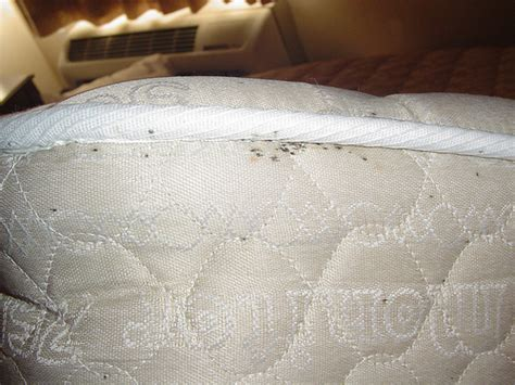 what to look for in a mattress bed bugs evidence in hotels including fecal stains