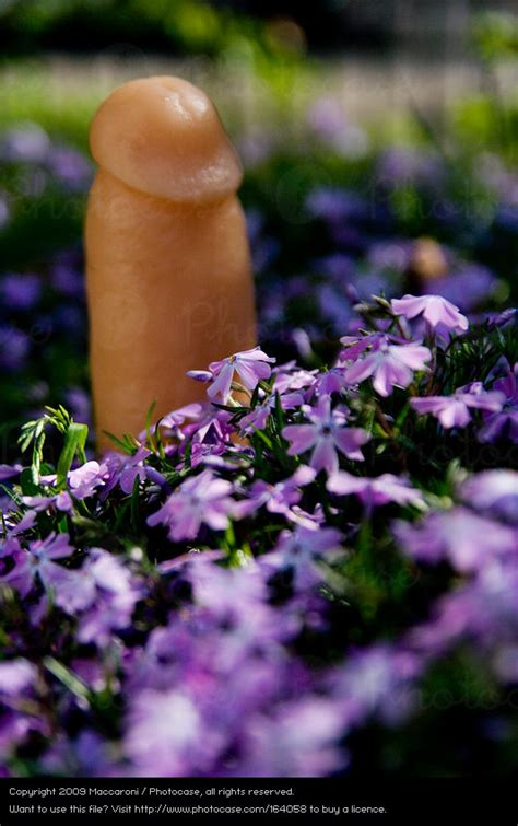 free backyard porn child hand flower love a royalty free stock photo from