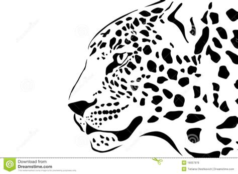 portrait of leopard royalty free stock image image 18057976