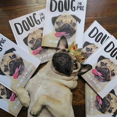 doug the pug meet and greet 87 than usual things to do in seattle this week november 2 6 things to