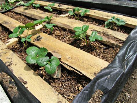 Pallet Garden Bed by Diy Pallet Garden How To Make Raised Wood Pallet Garden Bed
