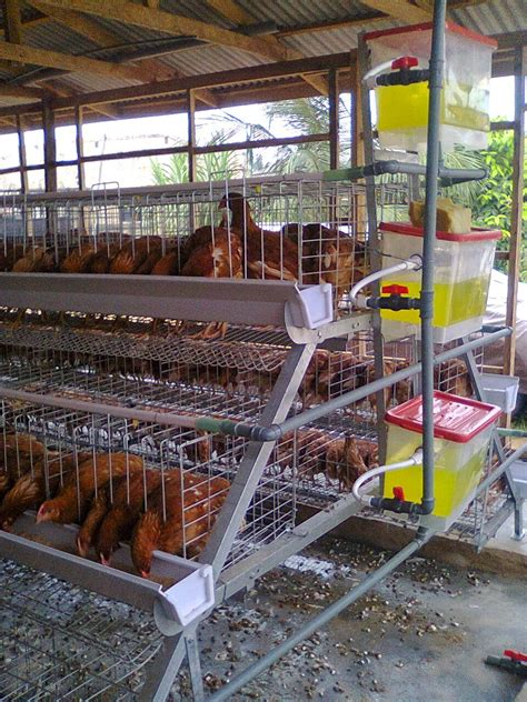 2015 nigeria poultry business plan for layers and broilers june 2015 coop and plan