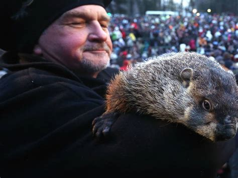 groundhog day events groundhog day illinois forecast special events