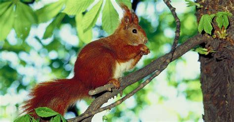Using Plants To Deter Squirrels From Your Garden Ehow Uk Squirrels In Vegetable Garden