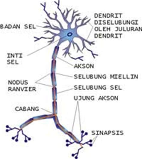 Psikologi Eksperimen Latipun sistem kerja sel saraf psychologymania