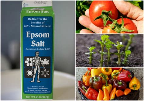 Epsom Salt In Garden by 10 Uses For Epsom Salt In The Garden