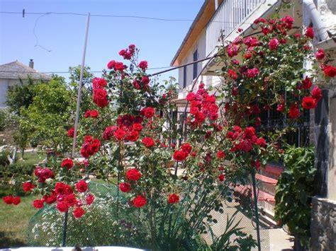 jardines con rosales jardines 187 rosales y jazmines