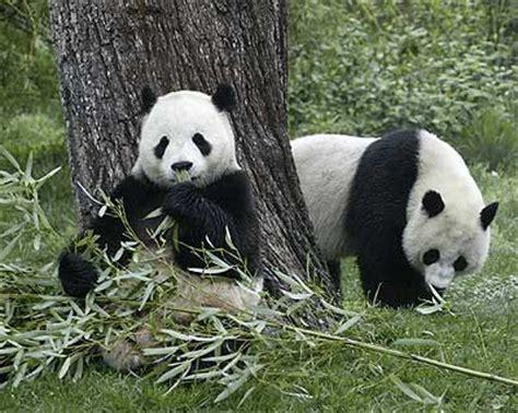 imagenes animales en peligro de extincion animales en peligro de extinci 243 n animales extintos