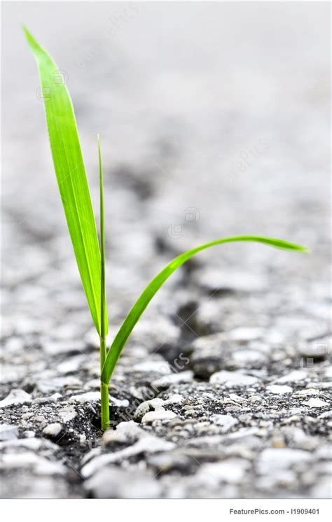 Photo Of Grass Growing From Crack In Asphalt
