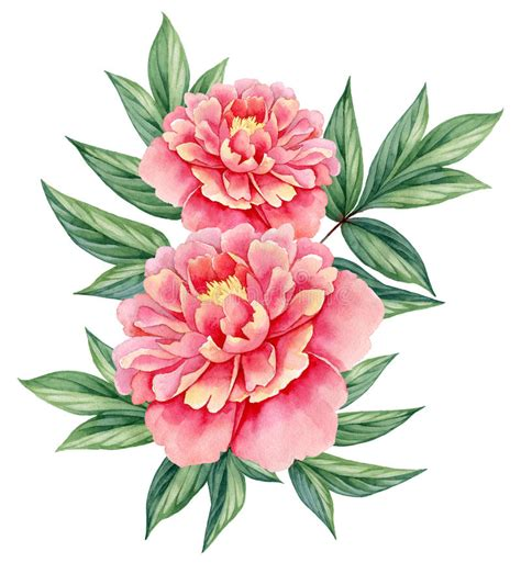 watercolor flower peony pink green leaves decorative