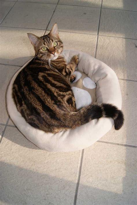 coussin pour chat les cr 233 ations de babette
