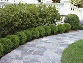 boxwood landscaping best 20 boxwood landscaping ideas on driveway