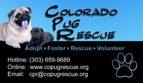 pug rescue colorado springs newsletter 01 2012 colorado pug rescue