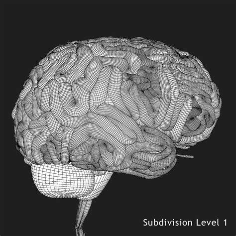 brain x brain x 3d model