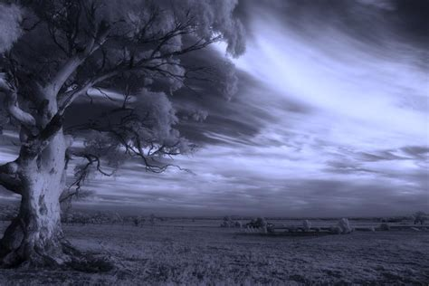 infra red photography