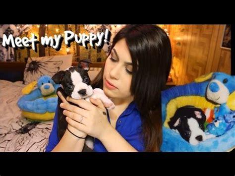 puppy haul overseas viovet haul 8 toys funnycat tv
