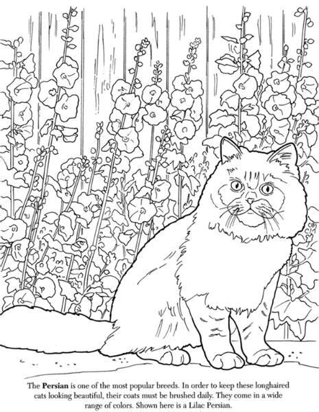 advanced cat coloring pages cat coloring pages colouring adult detailed advanced