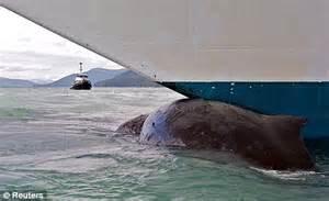 boat crash shark dead whale found pinned to princess cruise ship iin alaska