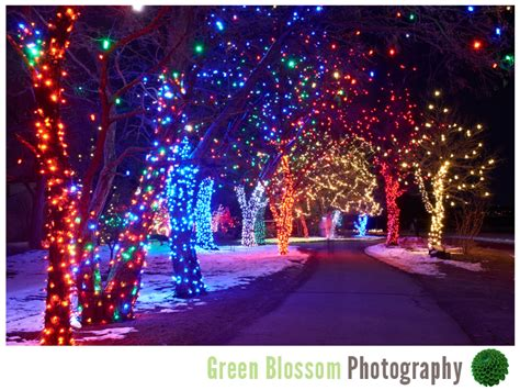 chatfield botanic gardens christmas lights trail of lights denver botanic gardens at chatfield wedding photography boulder green