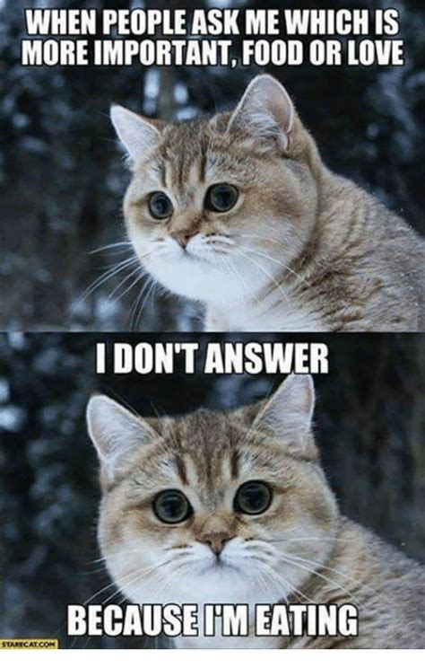 I Love Cats Meme - when people ask mewhich is moreimportant food or love i dont answer because im eating stare cat