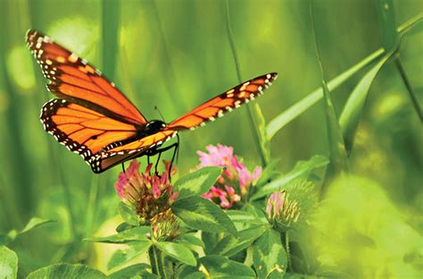 how to attract butterflies to your backyard how to attract butterflies to your yard atlanta magazine
