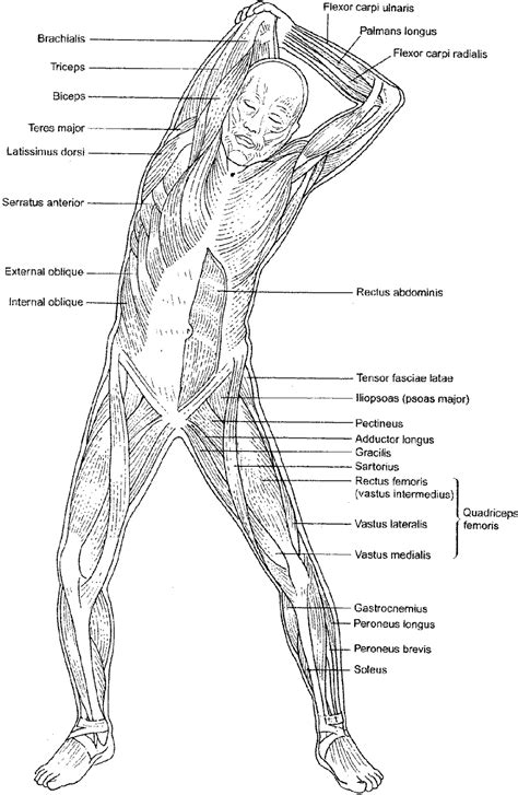 anatomy coloring in book anatomy coloring pages human muscles coloring human